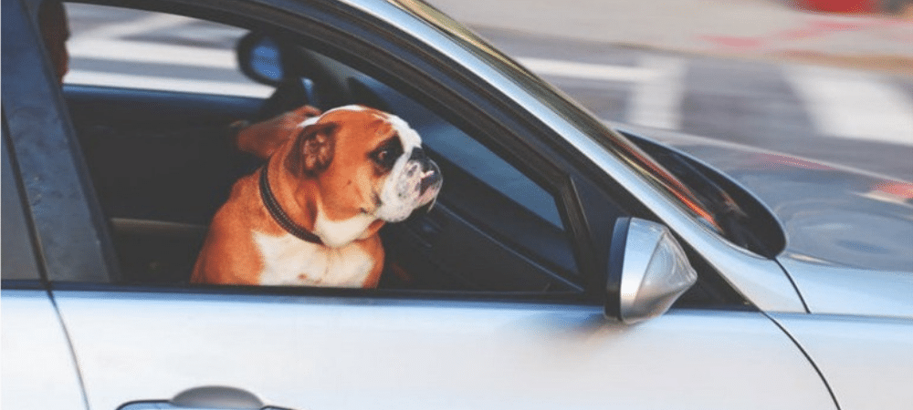 emigreren huisdier
